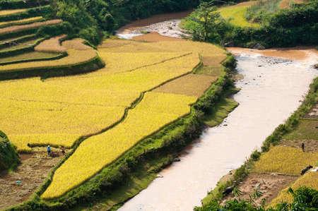 Small stream flowing through terraced fields  Mu Cang Chai District, Yen Bai Province, Vietnam
