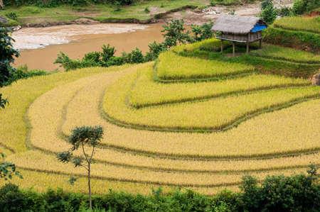 Small stilt houses on terraced field  Mu Cang Chai District, Yen Bai Province, Vietnam