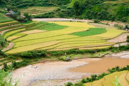 Small stream flowing through the terraced fields , Mu Cang Chai District, Yen Bai Province, Vietnam