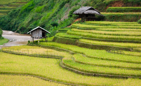 Small stilt houses on terraced fields with stream flowing through  Mu Cang Chai District, Yen Bai Province, Vietnam Stock Photo