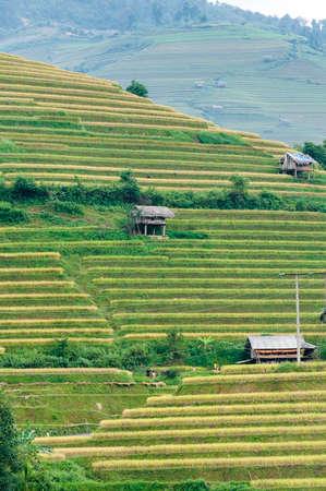 Small stilt houses on terraced fields  Mu Cang Chai District, Yen Bai Province, Vietnam
