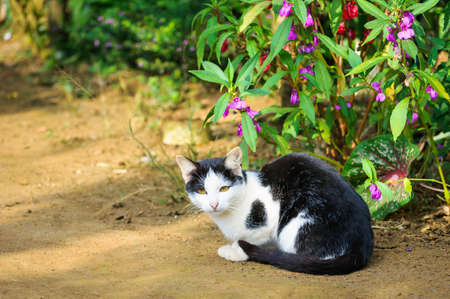 Cat sitting by the flowering shrubs