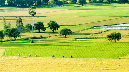 Farmers go to work by bicycle, the field in the early morning  Mekong Delta, An Giang Province, Vietnam Stock Photo