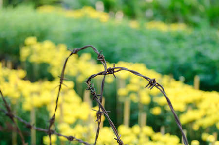 Barbed wire fence and flowers photo
