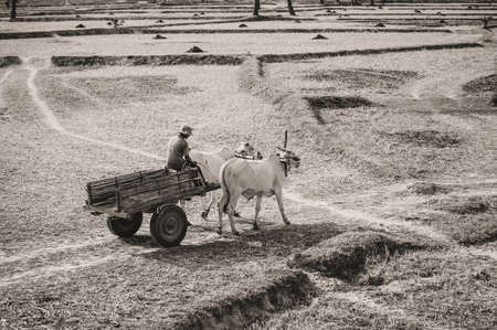 Young Vietnamese farmer on wagon car, through harvested field, Vietnam Cambodia border  An Giang Province, Vietnam photo