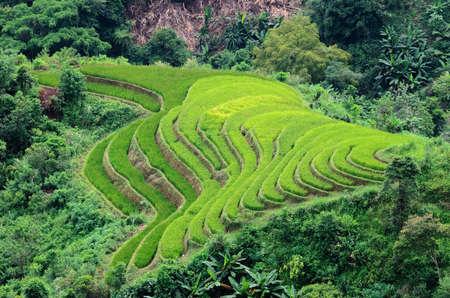 ha giang: Hoang Su Phi terraced fields, Ha Giang Province, Vietnam