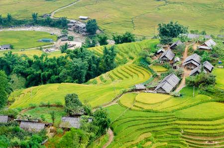 Hilltop village, Muong Hoa valley terraced fields, Sa Pa Town, Vietnam