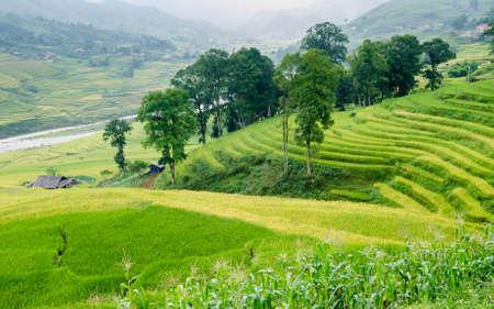 Muong Hoa valley terraced fields, Sa Pa Town, Vietnam