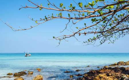 Lush tree branch on the beach  Nam Du Islands, Kien Giang, Vietnam