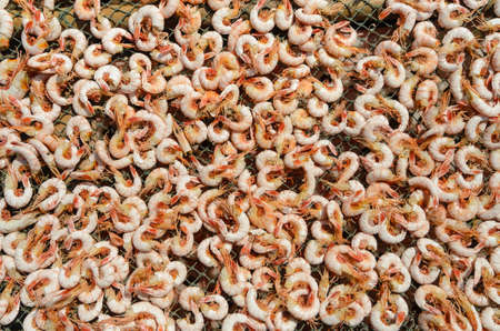 Close-up view of  shrimps being dried in the traditional way, Vietnam photo