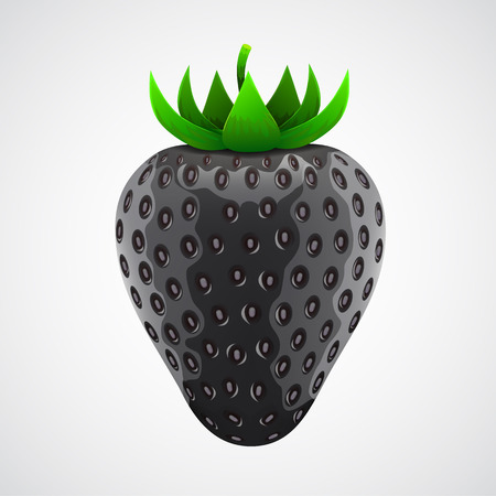 Exotic black strawberry isolated on white background. Vector