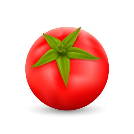 Tomato on white background art. Vector illustration Illustration