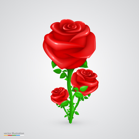 centifolia: Vector rose. illustration art flower red background