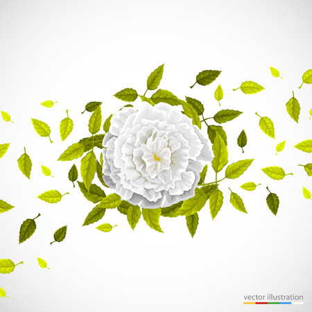 White flower and leafs on bright background