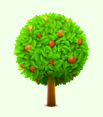 Cute orange or mandarin tree with green leaves and ripe oranges. Realistic citrus tree. Eco harvest concept.