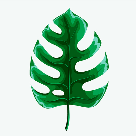 Green leaf of palm tree isolated on white background. Palm leaf icon.