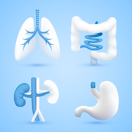 Human organs on a white background blue objects. Vector illustration