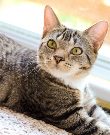 Young tabby in front of a storm door on carpet looking up toward the right  photo