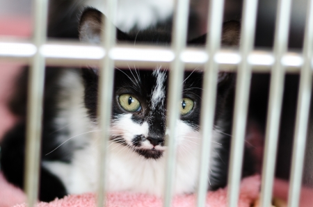 black and white kitten behind the bars of a cage Stock Photo