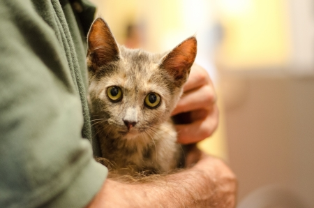 stoking: torie kitten being held in a man s arms showing hands and forearms very blurred back ground