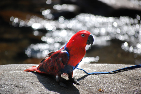parrot on rock