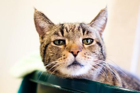 soulful eyes: Sad eyed tabby cat
