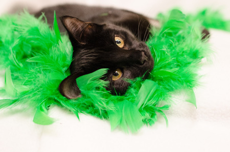 black boa: Black cat laying on green feathers