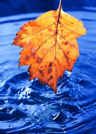 Autumn yellow leaf photo