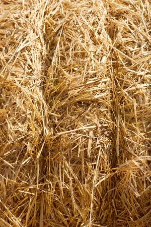 fardos: Fondo de Pajares de trigo.