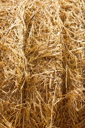 Wheat Haystacks background.