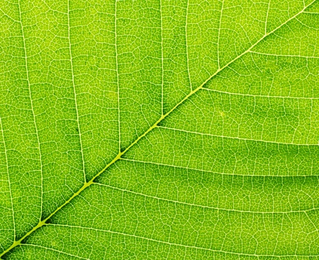 Leaf of a plant closeup. Macro. Stock Photo - 10353793