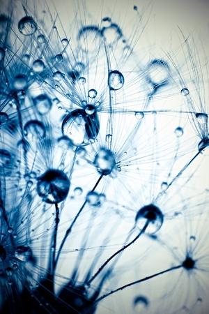 Аннотация фото макро семян растений с каплями воды.