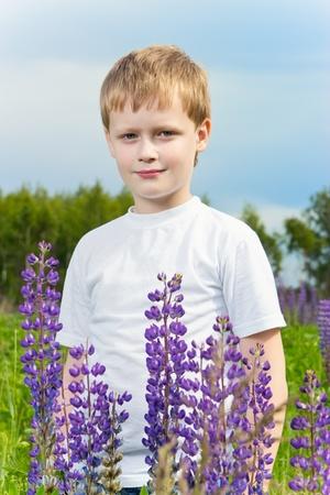 lupine: Cute boy in lupine field in sunny day