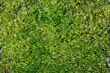 Абстрактный зеленый мох фоне Фото со стока