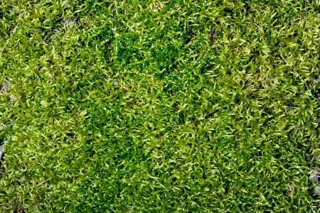 Abstract green moss background