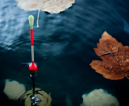 fishing bobber: Autumn fishing. Bobber float in water with yellow leafs.