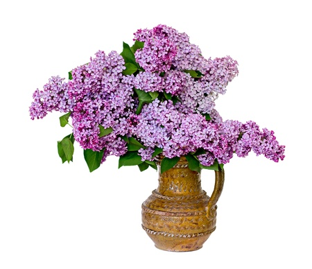Beautiful spring lilac bouquet in clay vase. Isolated over white background. photo