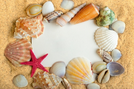 land shell: Sea shells lying on the pure golden sand with white card  Macro  Copy space