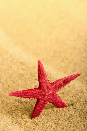 Starfish on the clean golden sand  photo