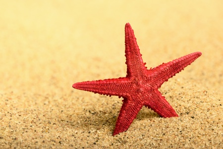 Starfish on the clean golden sand Stock Photo - 13591129