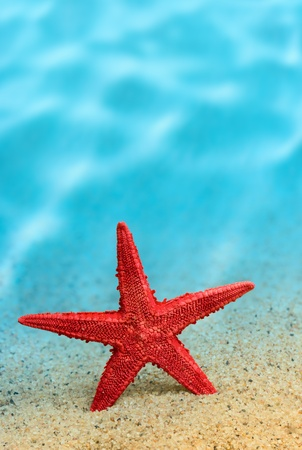 Welcome to the resort  Starfish on the clean golden sand in a welcoming gesture  Underwater  Macro Stock Photo - 13591119