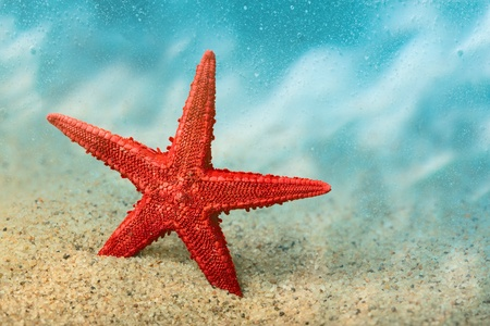 Welcome to the resort  Starfish on the clean golden sand in a welcoming gesture  Underwater  Macro  photo