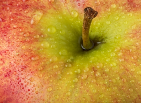 Apple close-up Stock Photo - 16492607