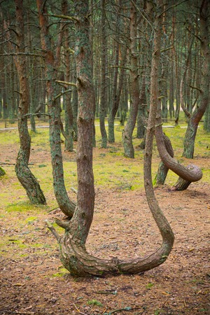 Dancing forest  Stock Photo