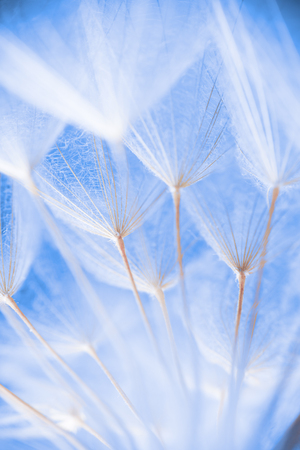 Abstract macro photo of plant seeds at a morning Stock Photo
