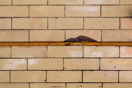 Shiny yellow brick wall texture