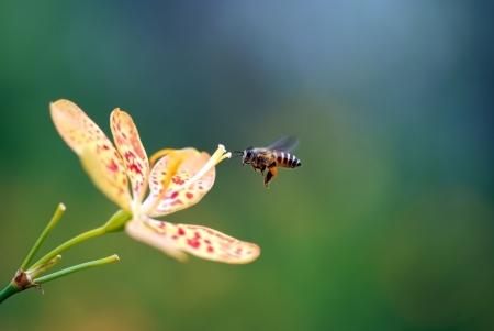 Biene und Blume Standard-Bild