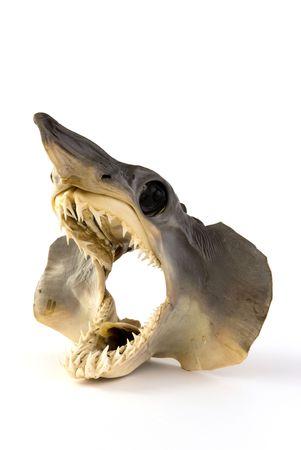 Head of a juvenile shark photo