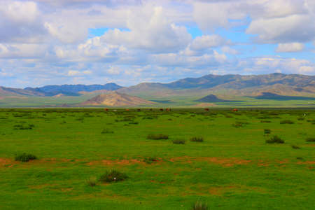 Mongolia steppe landscape of infinite grasslands under beautiful cloud in blue sly