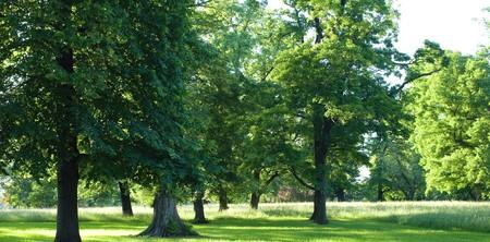 succulents arbres verts sur un pré ensoleillé dans les parcs de la ville